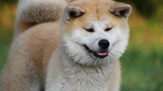 犬パラインフルエンザ感染症とは?症状や治療法、予防方法もご紹介!
