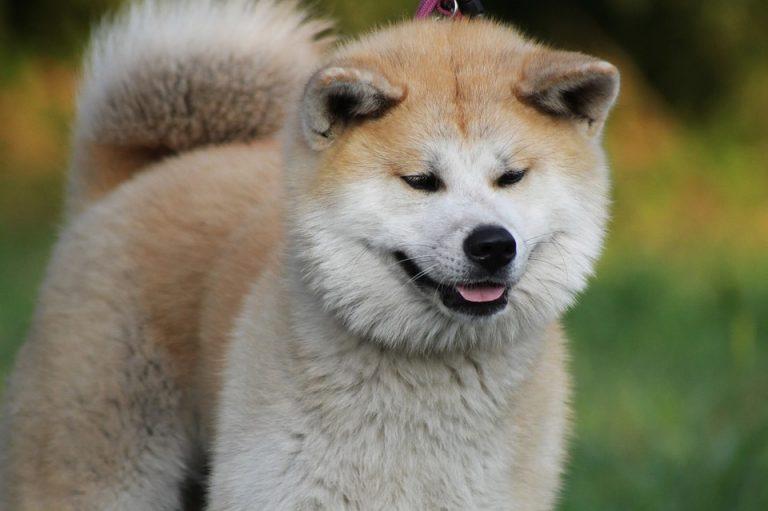 犬パラインフルエンザ